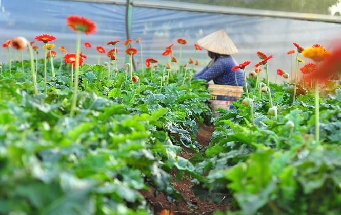 lam-dong-1623065462.jpg